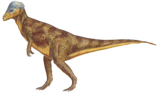 What dinosaurs look like 11