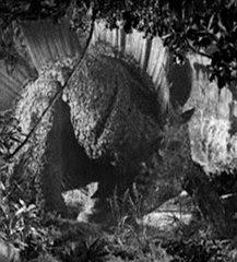 Stegosaurus closeup