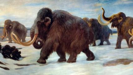 Wooly_Mammoths-e1395702786857