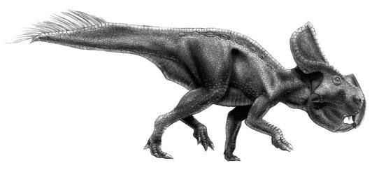 protoceratopsWeb.jpg