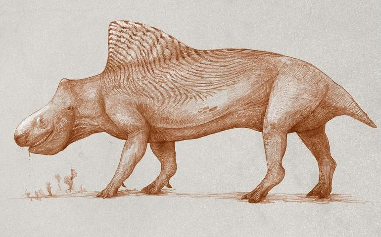 Six animals changing size before your eyes   New Scientist  Shrinking Animals